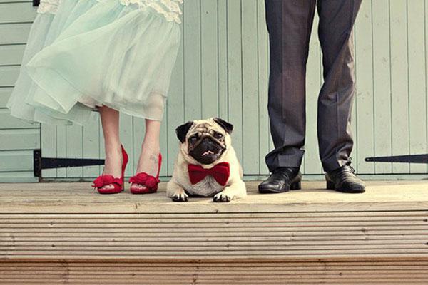 pet-in-wedding-7